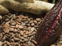 Подборка рецептов из какао бобов